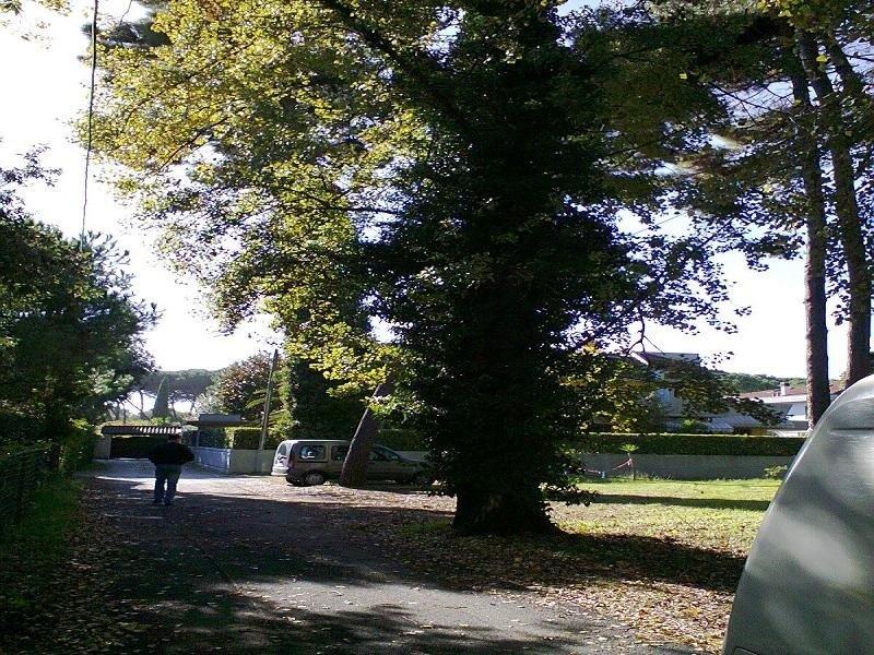 pulitura parchi e giardini pubblici e privati