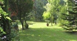 alberi per aree verdi, piante, abbattimento alberi