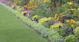 piante da esterno, annaffiatura giardini, arieggiatura