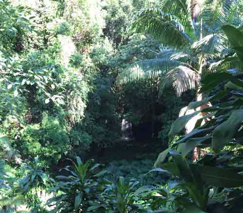 View of the green vegetation