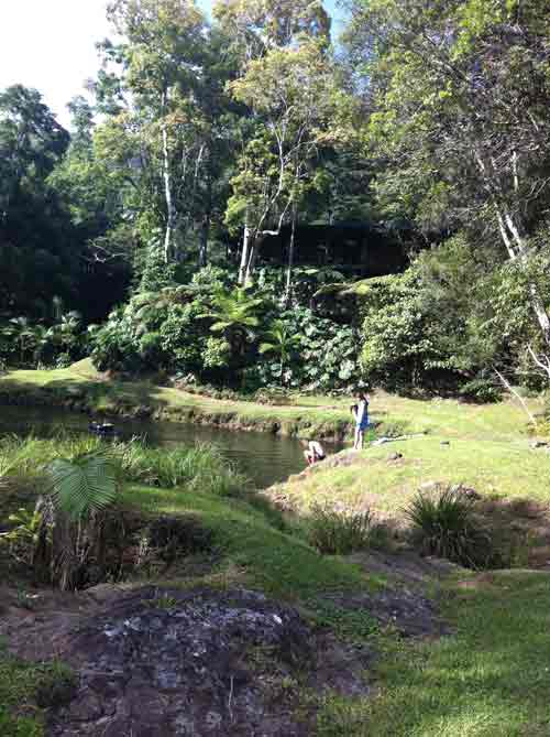 View of the lake at the rainforest in Mullumbimby NSW