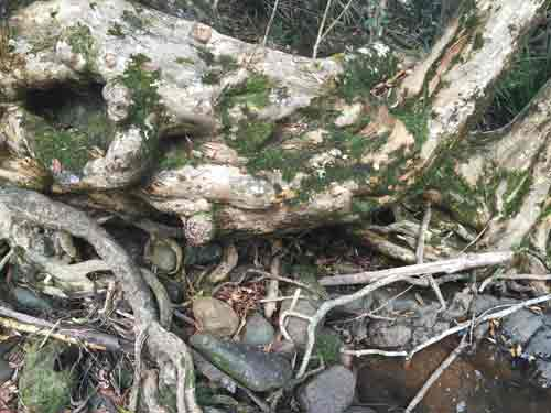 View of the exposed roots