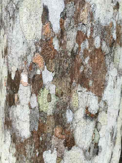 View of the bark of the tree