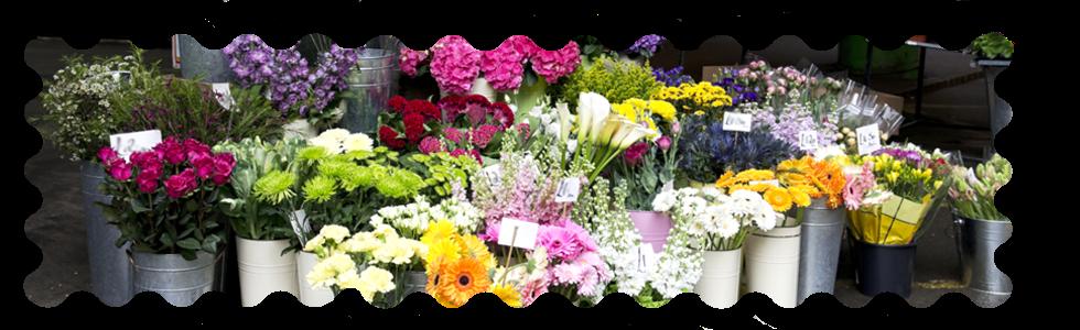 vasi piante e fiori