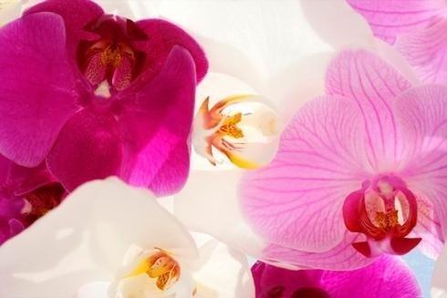 Composizioni di orchidee
