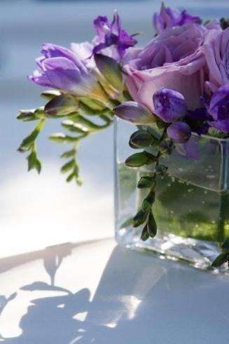 fiori freschi, mazzi di fresie, piante fiorite