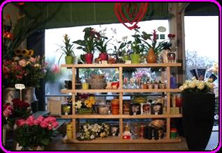 esposizione piante e fiori