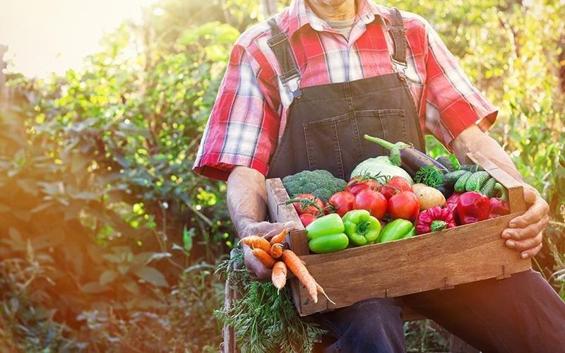 uomo che trasporta una cesta di verdure