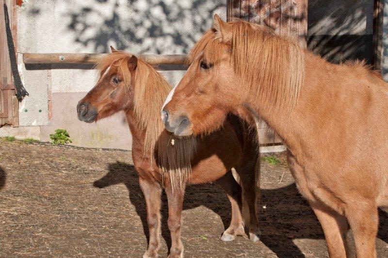 Pferde Vollmershof