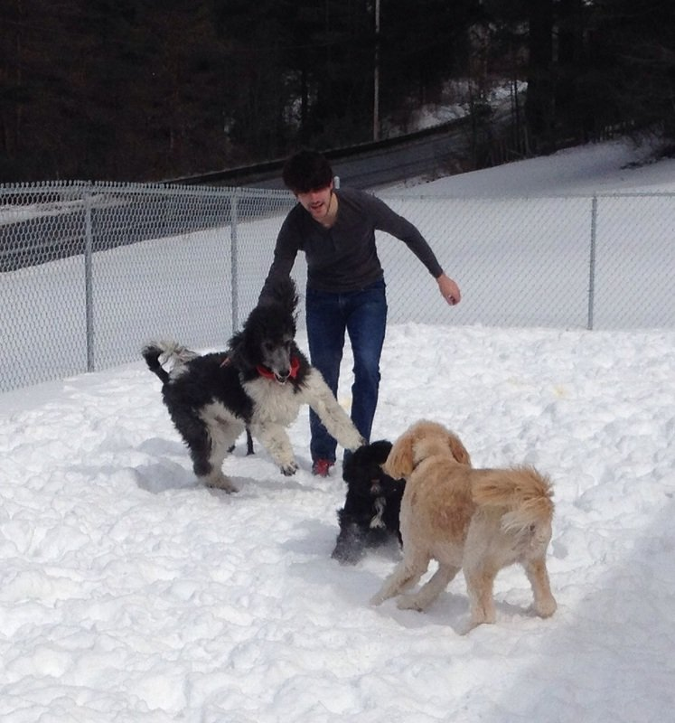 The Kingdom Canine Center in Lyndonville, Vermont