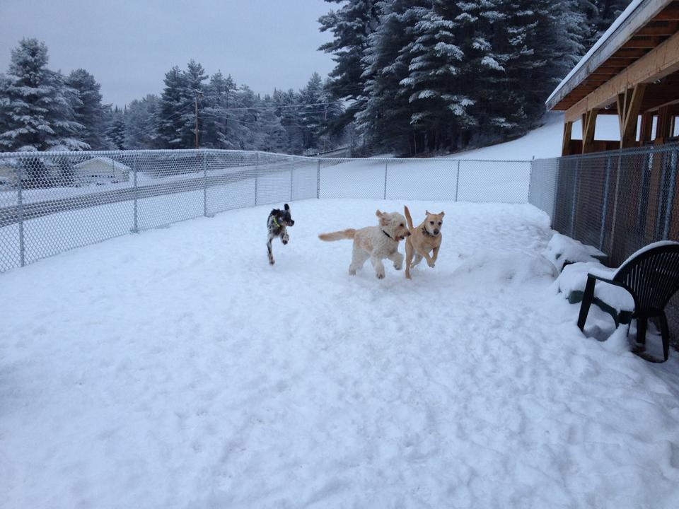 Kingdom Canine Center in Lyndonville, VT