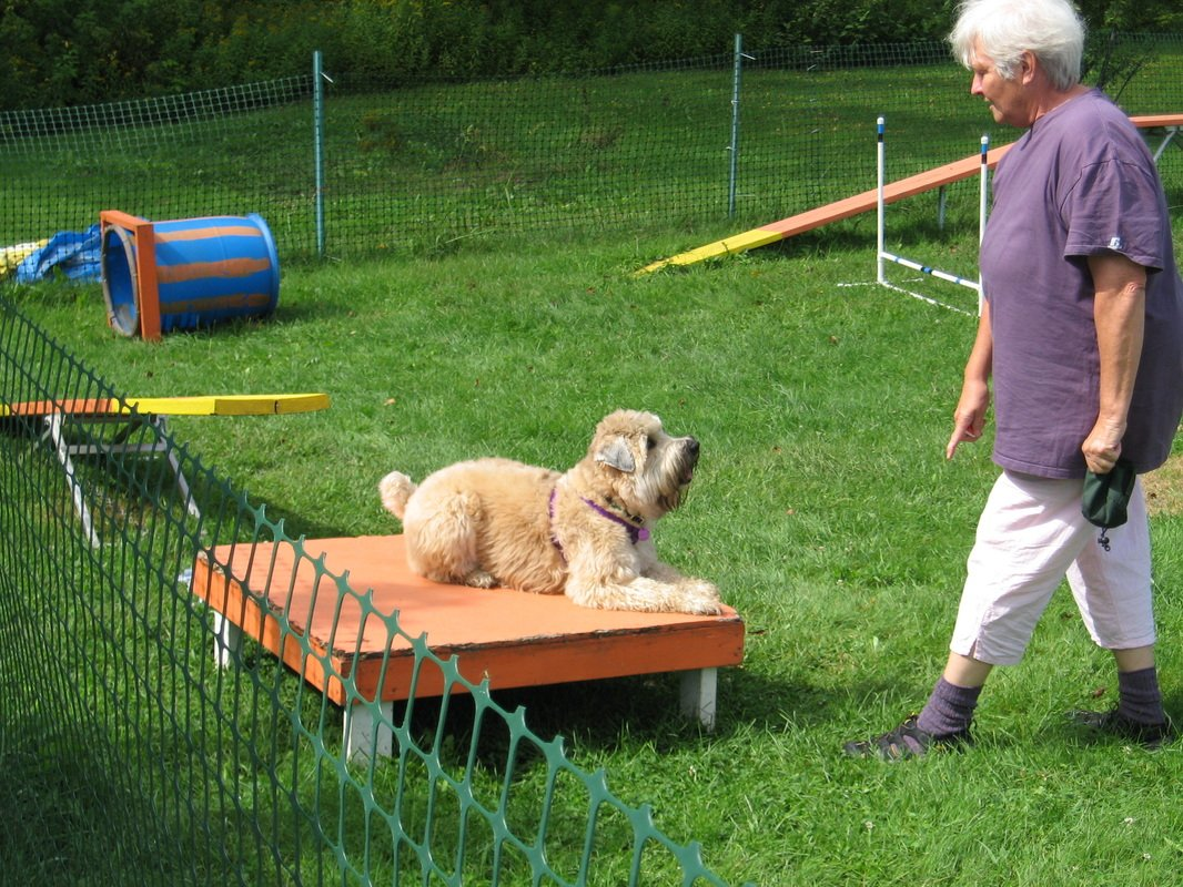 Kingdom Canine Center Dog Agility Training Lyndonville VT