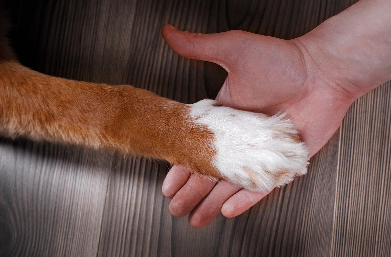 Dog & Cat Grooming Lyndonville, VT
