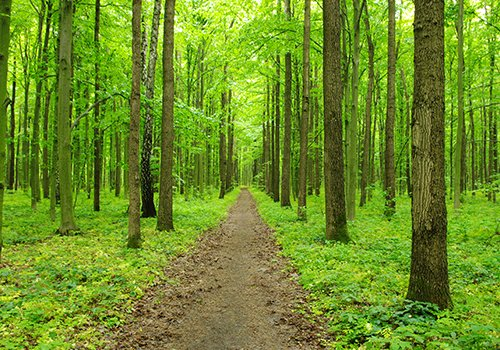 Strada tra alberi