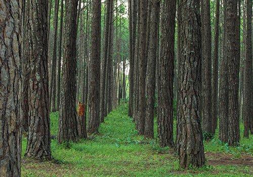 Una Piantagione di alberi