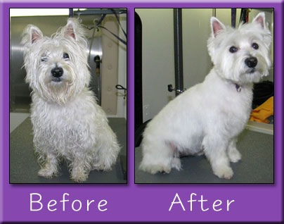 Professional providing grooming services to dog in Montville, CT