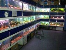 Marine fish - Durham - Fish Alive - Maintaining aquariums