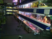 Tropical fish - Durham - Fish Alive - Tropical fish