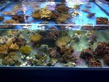 Custom built aquariums - Durham - Fish Alive - Aquatic shop
