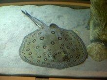 Fish importers - Durham - Fish Alive - Marine fish