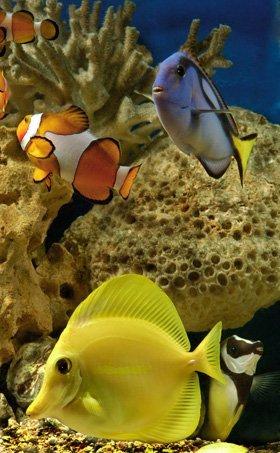 Aquatic shop - Durham - Fish Alive - Aquatic shop