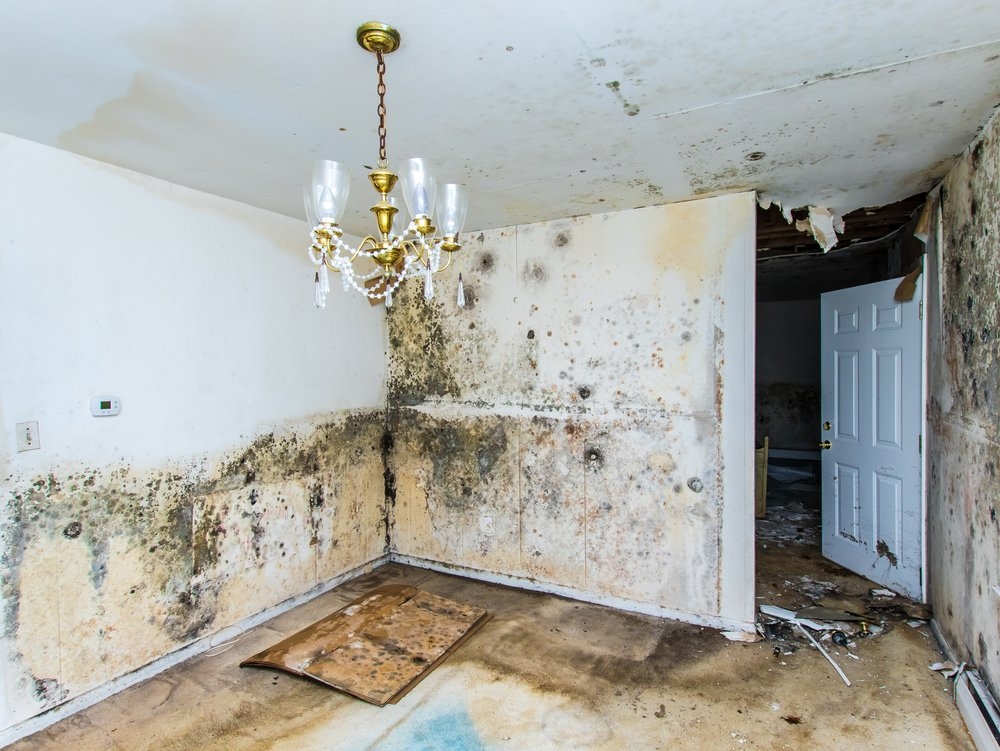 Treating Mold Damage With Care