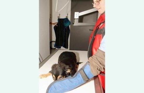 cane durante una visita medica