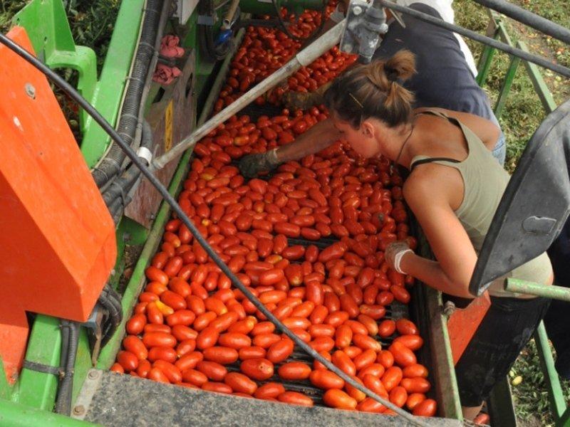 Sardinian farmers