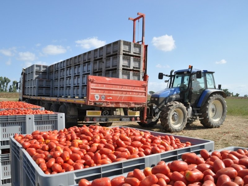 Processing tomato puree
