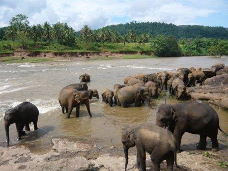 Sri Lanka Reise Pinnawela Elefanten