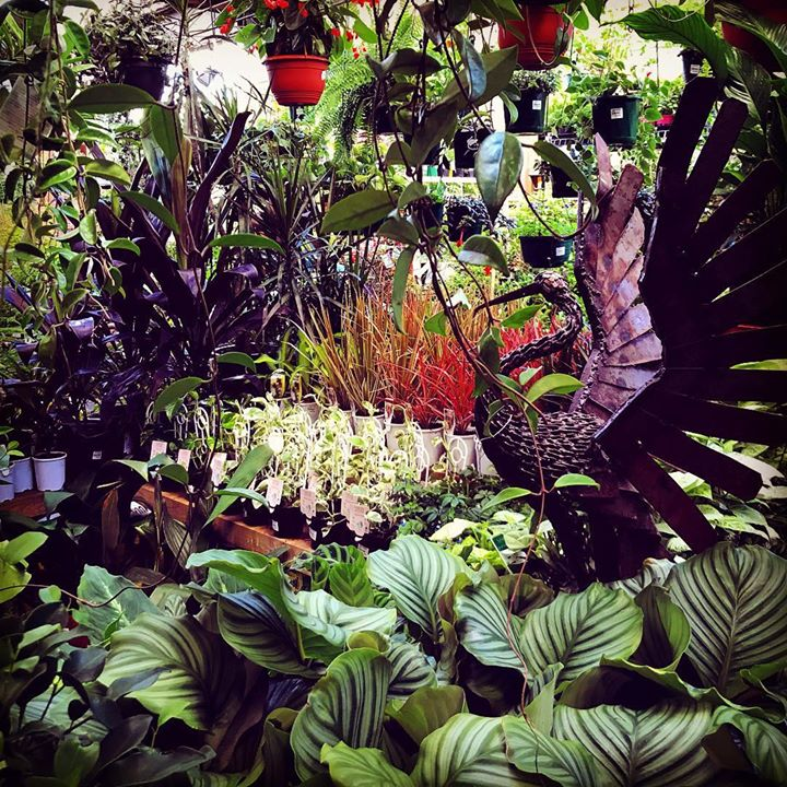 Newtown garden market - Mostardi s newtown square garden ...