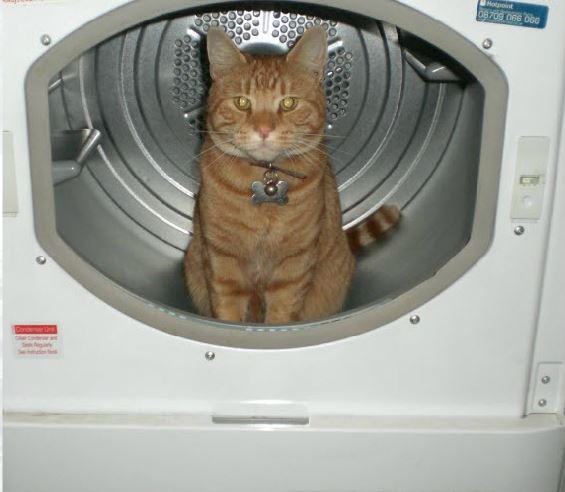 cat hiding in a washing machine