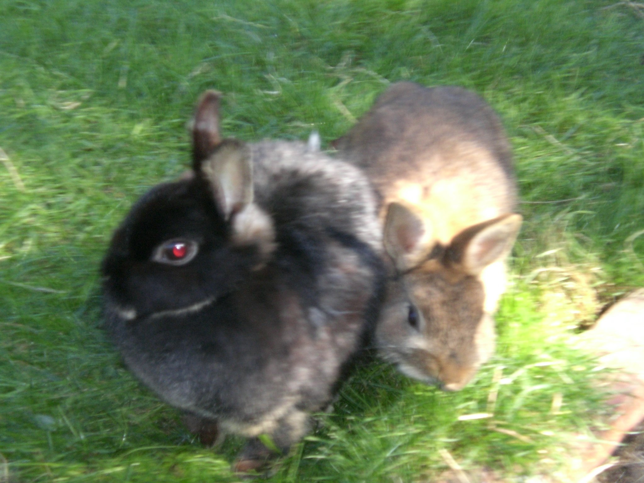 rabbits resting together