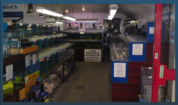 Maritime fish - West Drayton & Heathrow - Waterlife Centre - shop