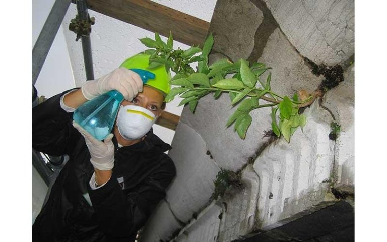Disinfestazione vegetazione superiore
