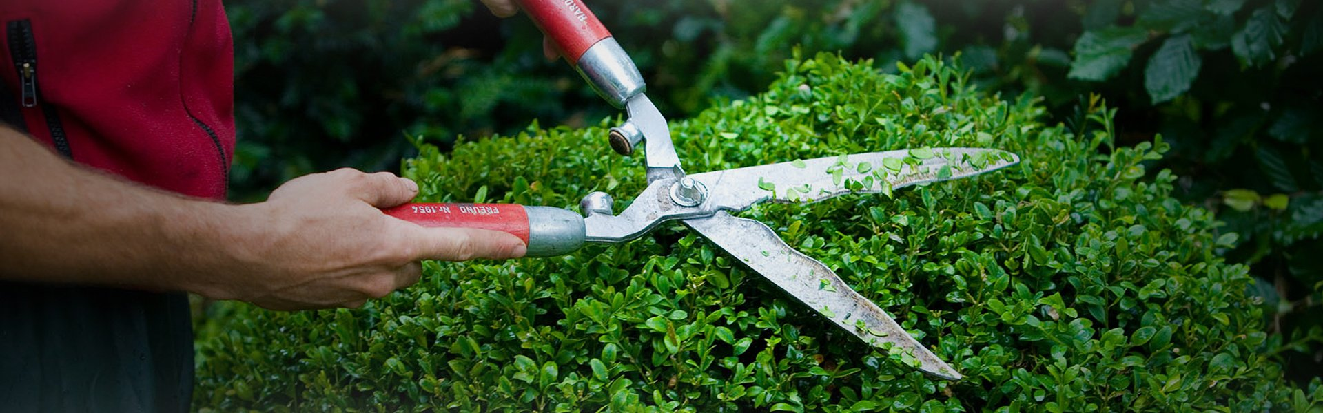 Branch pruning service