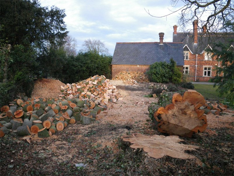 Trees to Firewood – Complete Service