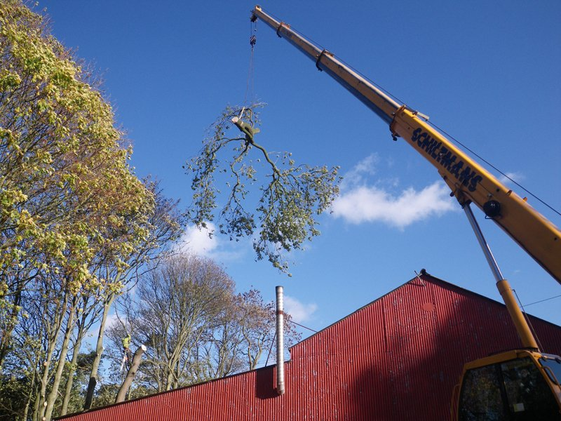 Crane removal of tree
