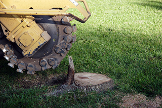 Stump Removal San Antonio, TX