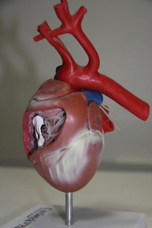Apparato del cuore
