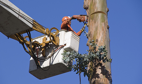 Professional removing a tree in Centralia, MO