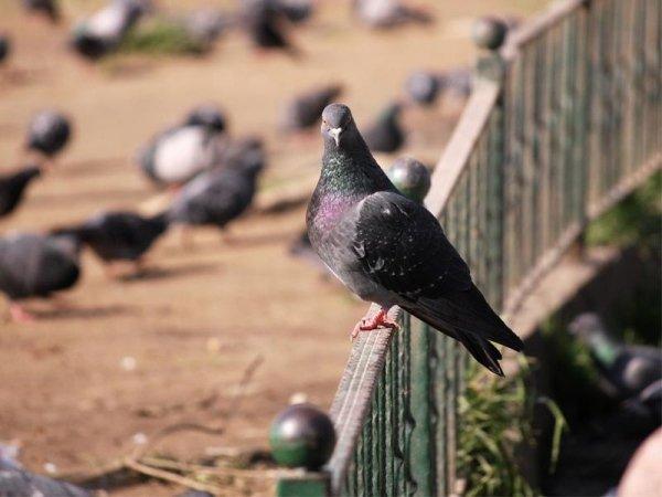 Vogelabwehr-System