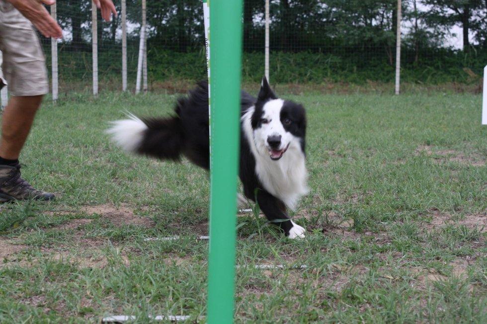 Agility Dog Pavia