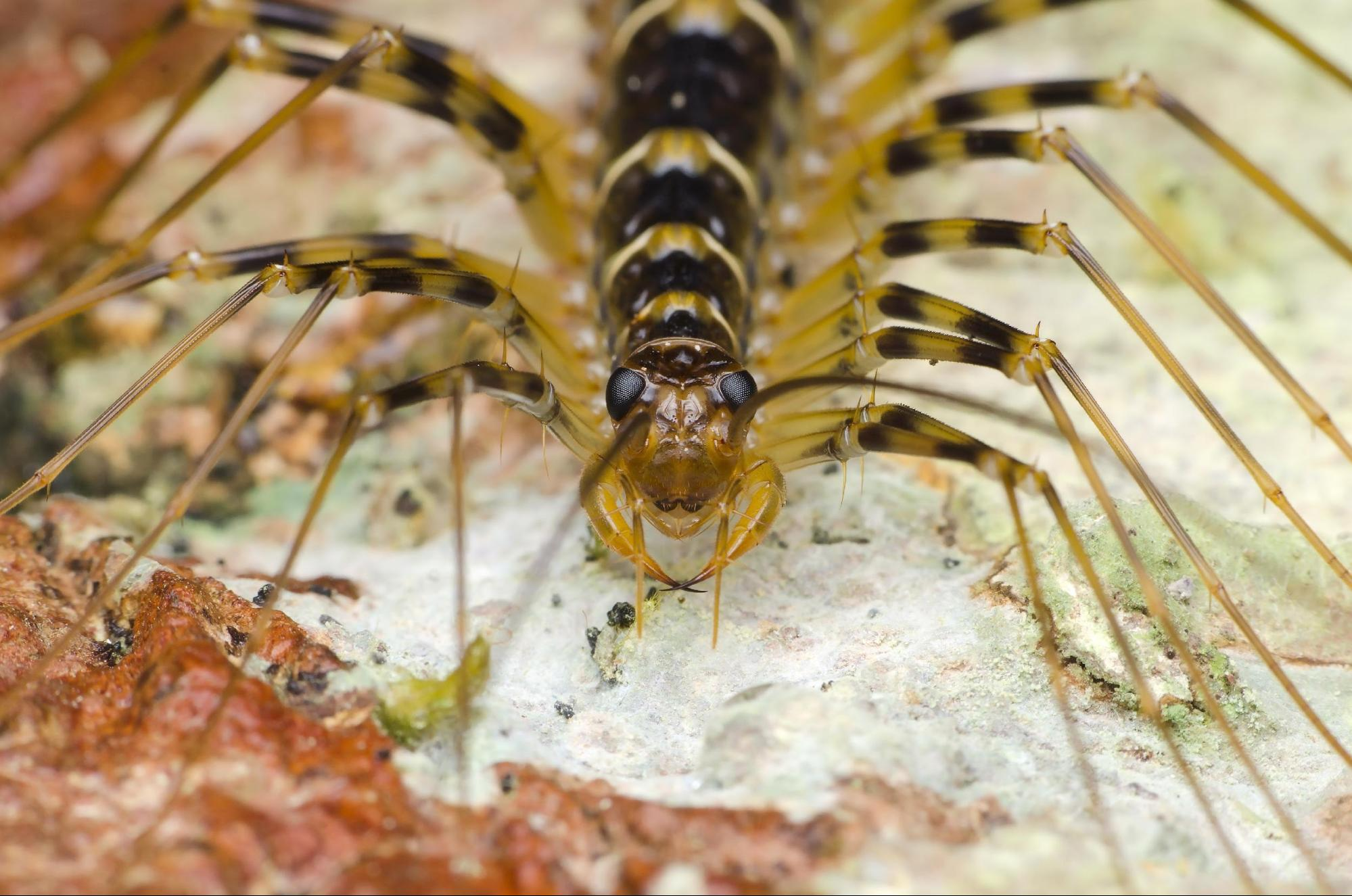 a day in the life of a house centipede in lexington ky. Black Bedroom Furniture Sets. Home Design Ideas