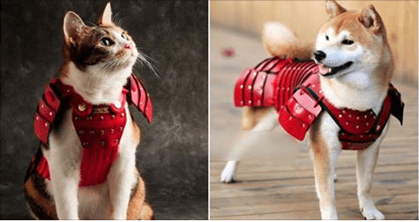 Japanese cat & dog wearing samurai armour. Martin Acton's Aikido institute