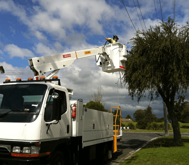 Tree Removals Latrobe Valley Valley Wide Tree Services