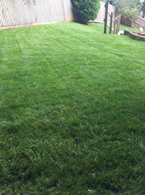 clean lawn