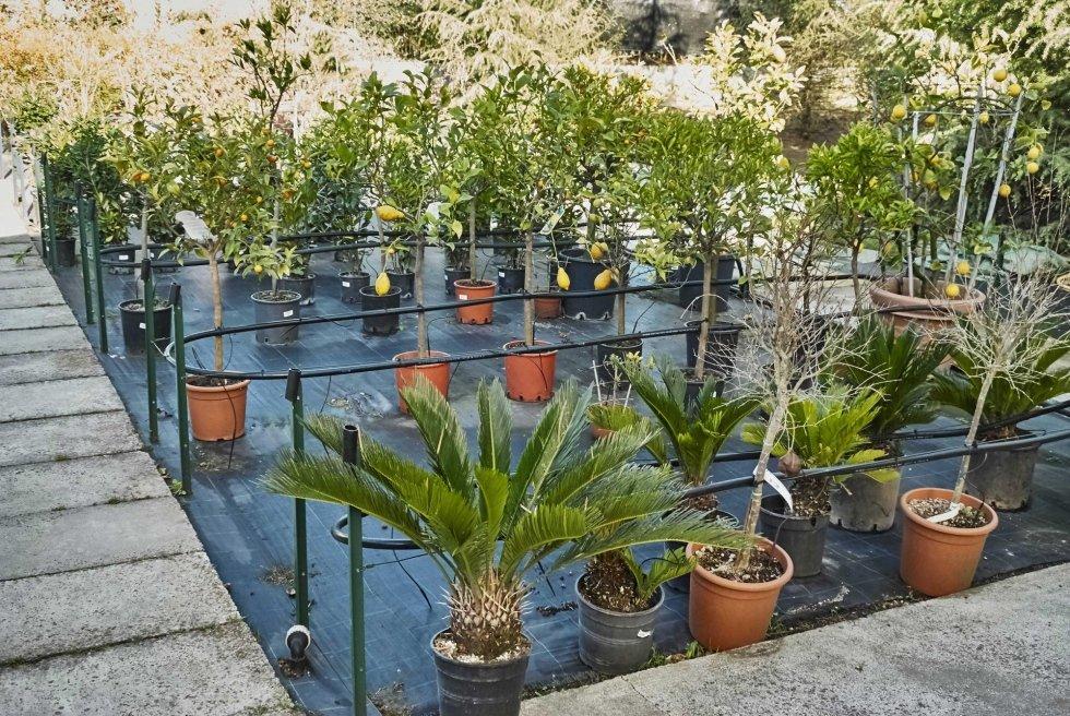 Garden Mazzieri