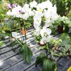 fiori freschi