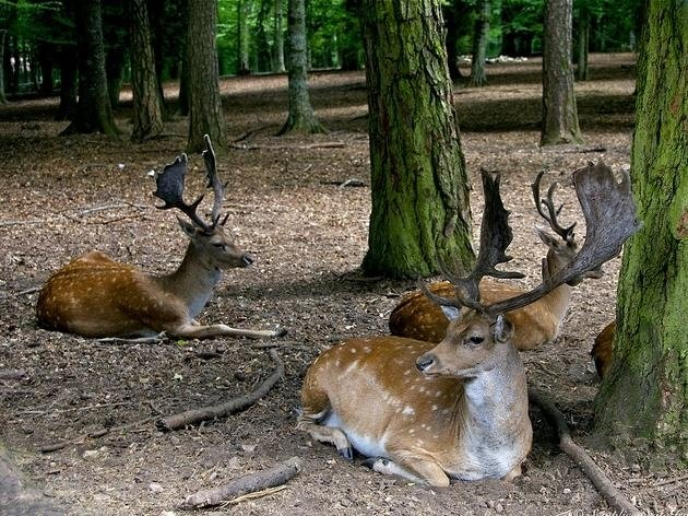 animali della foresta umbra
